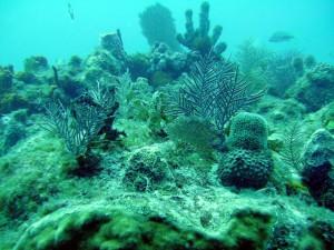 Coral Scape